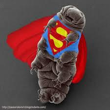 supertardigrado